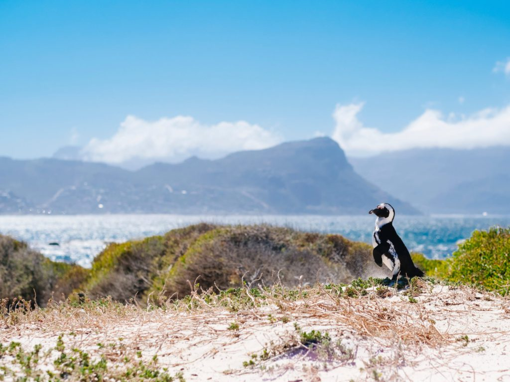 Cruise Zuid-Afrika, Namibië, Mozambique Oceania Cruises - Brasschaat Travel