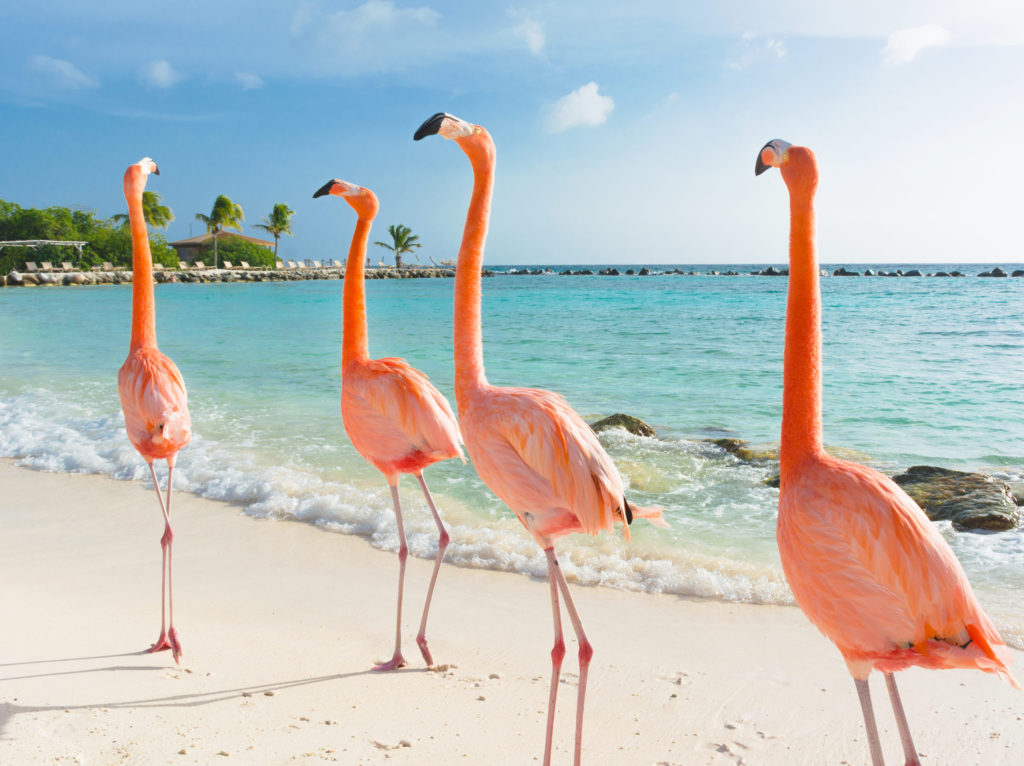 Aruba - Cruise Caraïben Oceania Cruises - Brasschaat Travel