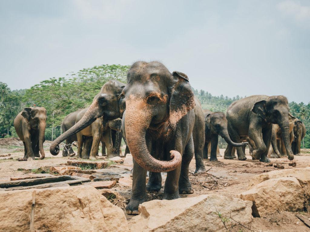 Rondreis in Sri Lanka tijdens de paasvakantie - Brasschaat Travel