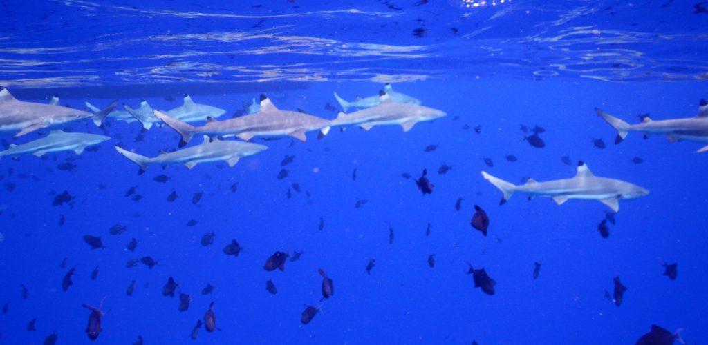 Frans Polynesië - onder water